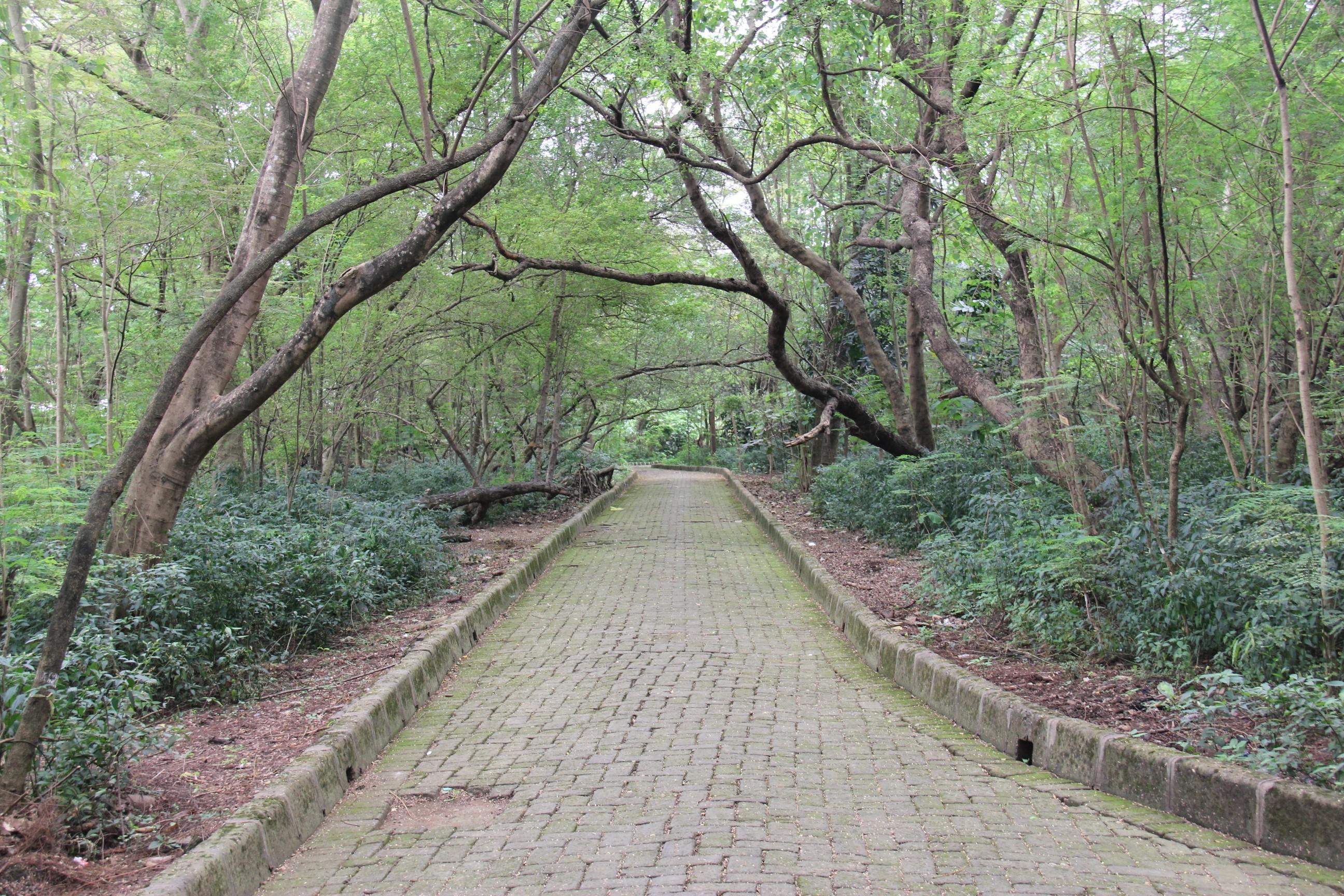 Urban Forest Rawa Buaya