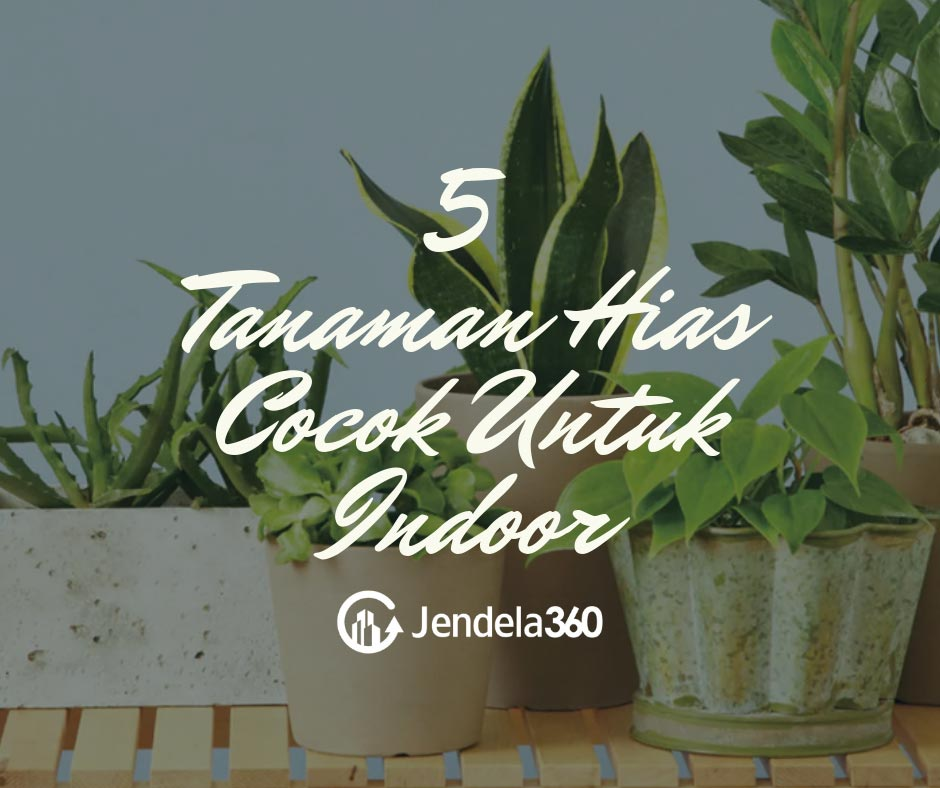 5 Tanaman Hias Cocok Untuk Indoor Dan Tips Merawatnya
